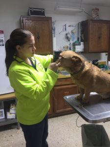 Blaine_County_Veterinary_Service_Small_Animal_dog_vet